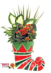 Elf Boot Planter in Cornwall ON, Fleuriste Roy Florist, Ltd.