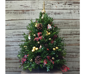 Boxwood Tree  in Fairfield CT, Town and Country Florist