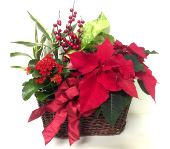 Poinsettia Basket Planter in Wyoming MI, Wyoming Stuyvesant Floral