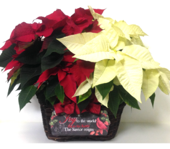 Joy to the World Poinsettia Basket in Wyoming MI, Wyoming Stuyvesant Floral