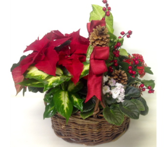 Christmas Planter Basket in Wyoming MI, Wyoming Stuyvesant Floral