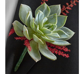 Succulent Boutonniere in Indianapolis IN, George Thomas Florist