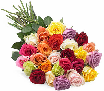 24 Mixed Roses Wrapped in Miramichi NB, Country Floral Flower Shop