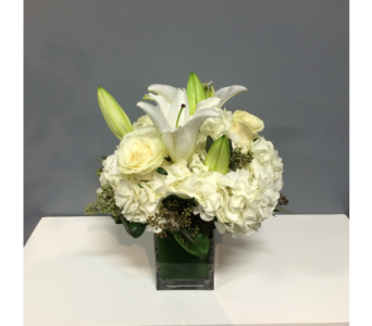 Crisp White in Thornhill ON, Orchid Florist