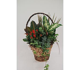 High Handle Planter Basket in Timmins ON, Timmins Flower Shop Inc.