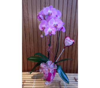 Tropical Love Orchid in Waterbury CT, The Orchid Florist