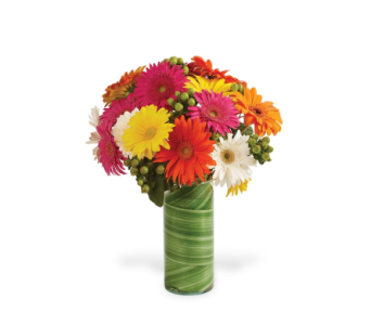 Gerbera With A Twist! in Big Rapids, Cadillac, Reed City and Canadian Lakes MI, Patterson's Flowers, Inc.