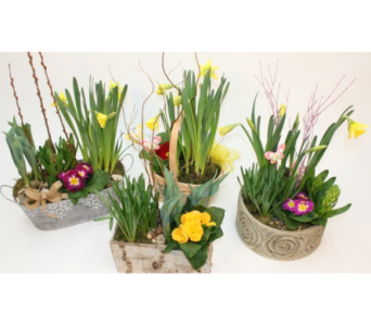 Spring Bulb Planter in Alliston, New Tecumseth ON, Bern's Flowers & Gifts