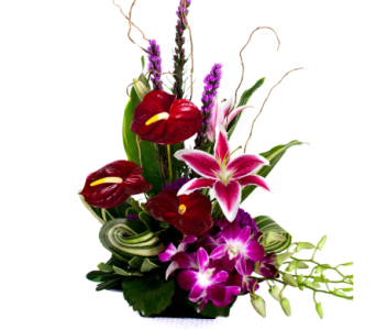 Exotic Tropics in Nashville TN, Emma's Flowers & Gifts, Inc.
