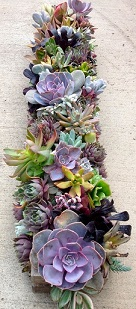 Long Succulent Box in Kentfield CA, Paradise Flowers