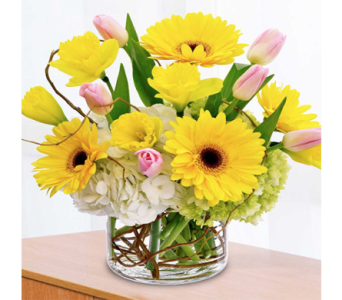 Spring Sunshine in Indianapolis IN, George Thomas Florist