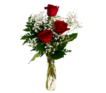 Roses in Budvase in Nashville TN, Emma's Flowers & Gifts, Inc.