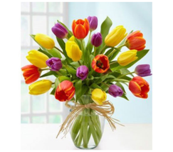 20 Mix Color Tulips in Modesto CA, Flowers By Alis