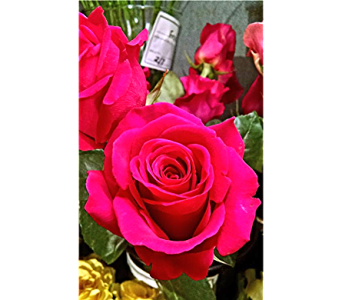 HOT PINK FLOYD VALENTINE ROSES in Massapequa Park NY, Bayview Florist & Montage  1-800-800-7304