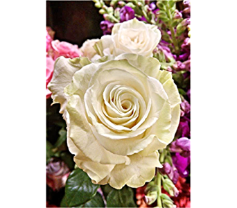 WHITE MONDIAL VALENTINE ROSES in Massapequa Park NY, Bayview Florist & Montage  1-800-800-7304