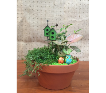 Fairy Garden in Sioux Falls SD, Cliff Avenue Florist