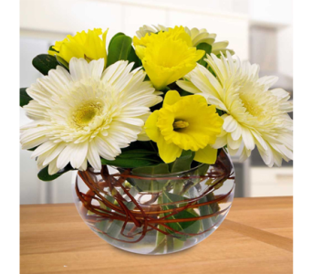 Gerbera Daisy & Daffodil Bowl in Indianapolis IN, George Thomas Florist