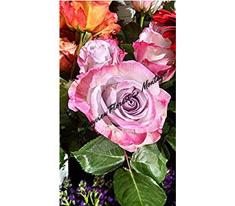 Lavender Roses in Massapequa Park NY, Bayview Florist & Montage  1-800-800-7304