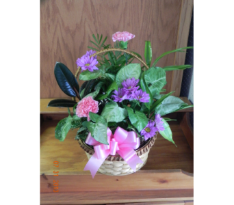 Medium Basket of Plants in Perry Hall MD, Perry Hall Florist Inc.