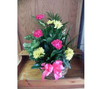 Large Basket of Plants in Perry Hall MD, Perry Hall Florist Inc.