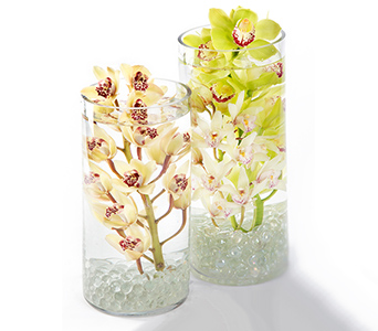 Cymbidium in Fort Worth TX, TCU Florist