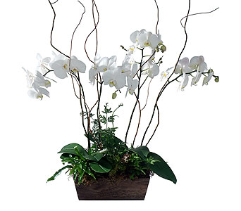Orchid & Fern Garden in Detroit and St. Clair Shores MI, Conner Park Florist