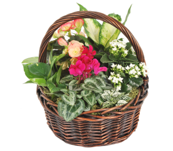 Euro Planter in a Brown Basket in Madison WI, Felly's Flowers