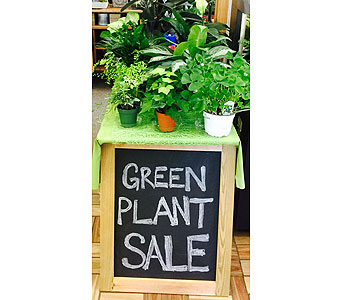 Plants in Northfield MN, Forget-Me-Not Florist