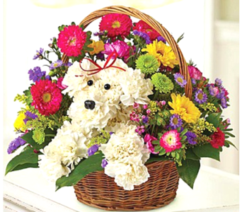 Puppy Love Basket in Columbia TN, Douglas White Florists