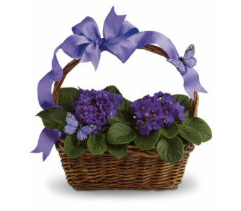 Violet Butterfly Basket in Hollidaysburg PA, Warner's Florist Gifts & Greenhouse