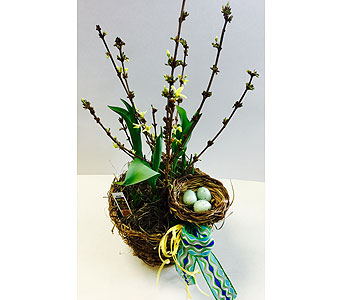 Mixed Bulb Nest Basket in Northfield MN, Forget-Me-Not Florist
