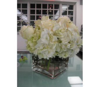 White Hydrangea in Campbell CA, Citti's Florists