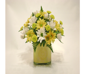 Lemon Drop Daisies in Herndon VA, Herndon Florist, Inc