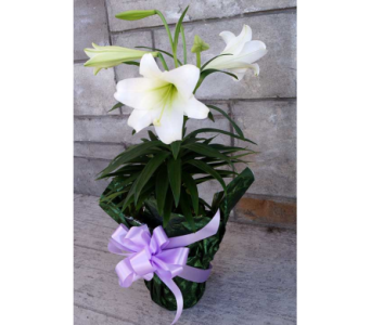 EASTER LILY (single) in Muskegon MI, Wasserman's Flower Shop