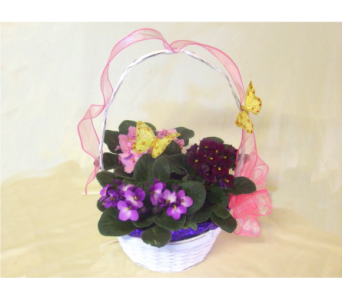Spring Butterfly and Violet Basket in Hollidaysburg PA, Warner's Florist Gifts & Greenhouse