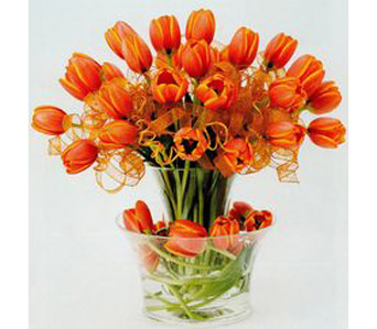 Orange Tulips in Campbell CA, Citti's Florists