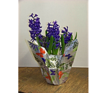 SIMPLY HYACINTH in Claremont NH, Colonial Florist