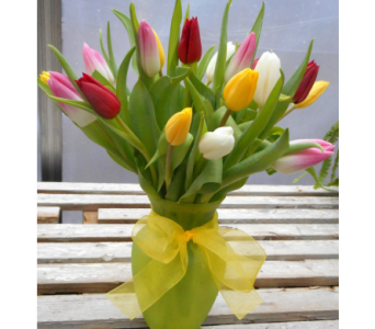 Sweet Selection Assorted Tulips in Skowhegan ME, Boynton's Greenhouses, Inc.