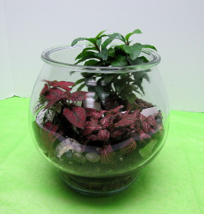 Terrarium in Traverse City MI, Teboe Florist