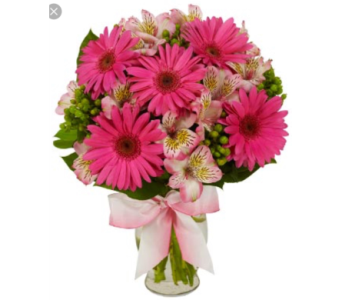 gerberas and astromaria  in Needham MA, Needham Florist