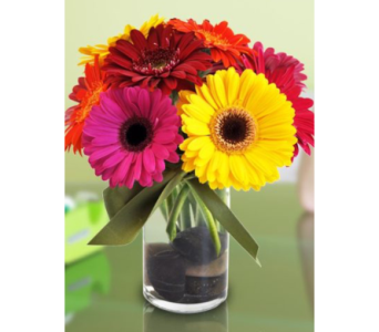 Splash of Gerbers in Needham MA, Needham Florist