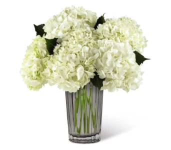Ivory Hydrangea Bouquet by Vera Wang dans Watertown CT, Agnew Florist