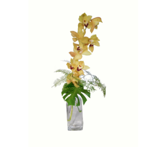 Cymbidium Chic in Little Rock AR, Tipton & Hurst, Inc.