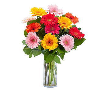 Grand Gerbera in Holladay UT, Brown Floral