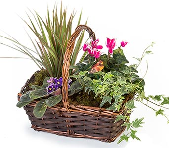 Flowering Garden Basket in Fort Worth TX, TCU Florist