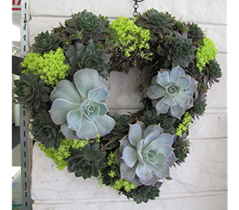 Heart Succulent Topiary in Traverse City MI, Teboe Florist