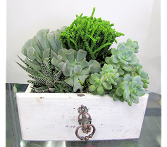 Succulent Garden in Drawer in Traverse City MI, Teboe Florist