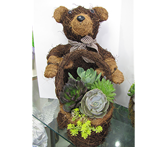 Succulent Bear in Traverse City MI, Teboe Florist