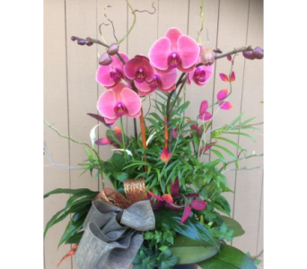 Planter with Orchid in Sunnyvale CA, Flowers By Sophia