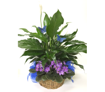 Peace Lily & Violets Willow Basket-12 inch basket in Wyoming MI, Wyoming Stuyvesant Floral